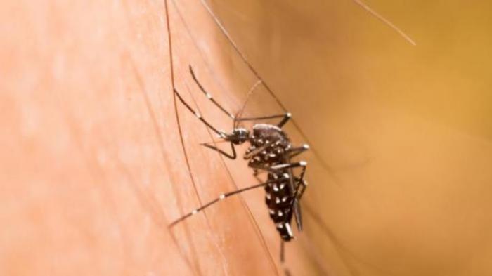 Tak Cuma Bikin Gatal, Gigitan Nyamuk Juga Bisa Pengaruhi Kekebalan Tubuh Lho