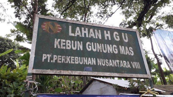 Tak Hanya Markaz Syariah, PTPN VIII Juga Somasi Warga Puncak Yang Gunakan Lahan Gunung Mas