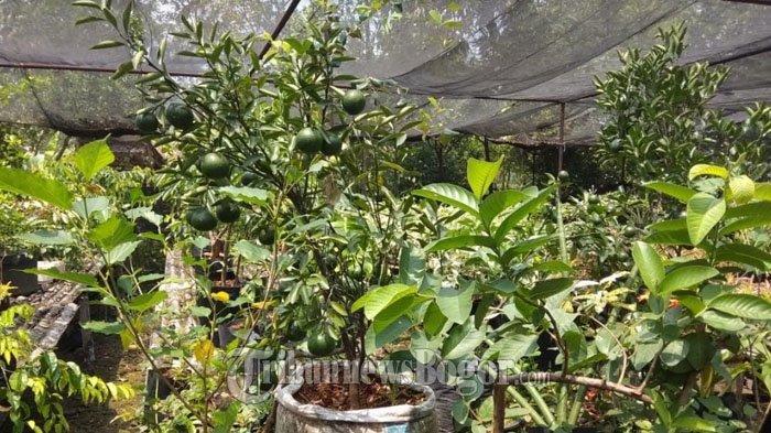 Berkunjung ke Parung Farm Bogor, Belajar Berkebun dengan Teknik Hidroponik