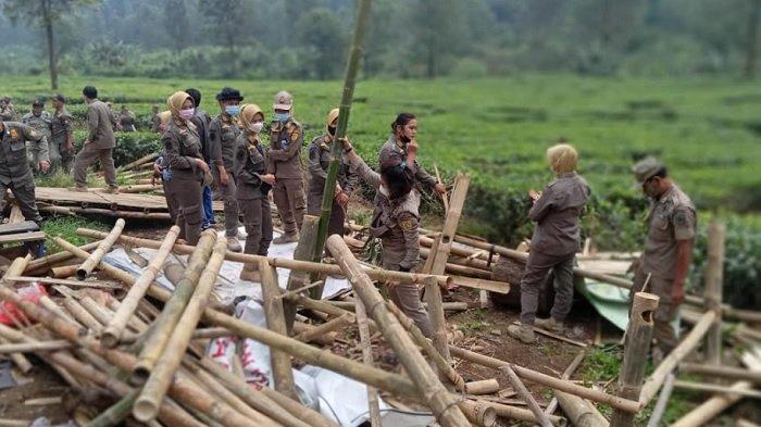 Tertibkan Ratusan Lapak PKL, Satpol PP Temukan Persembunyian di Semak Kebun Teh Puncak Bogor