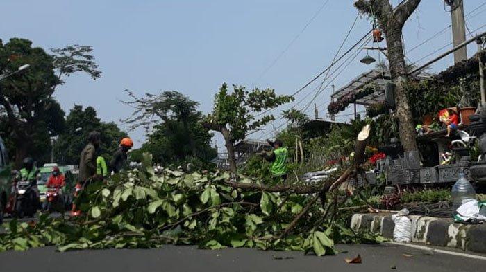 Bahayakan Pengguna Jalan, Sejumlah Pohon Besar yang Menjulur ke Jalan di Kota Bogor Dipangkas