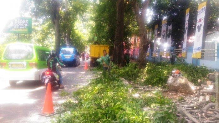 Antisipasi Pohon Tumbang Saat Musim Hujan, Petugas Kebersihan Pangkas Pohon di Sekitar Gor Pajajaran