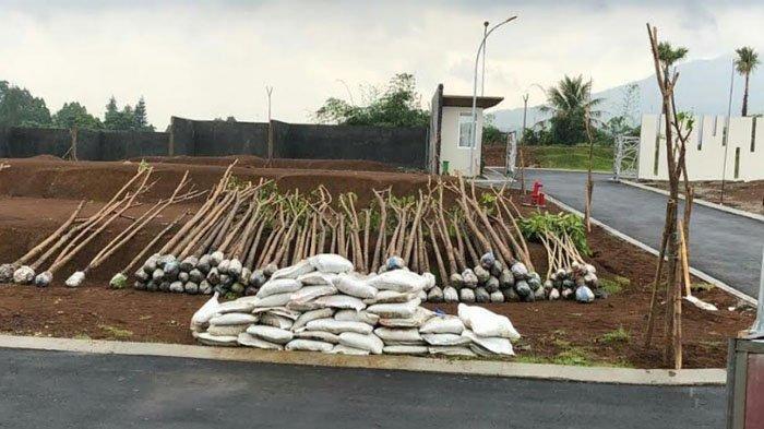 Buat Program Penghijauan, Bogor Village Super Block Tanam Ratusan Pohon Tabebuya Rosea