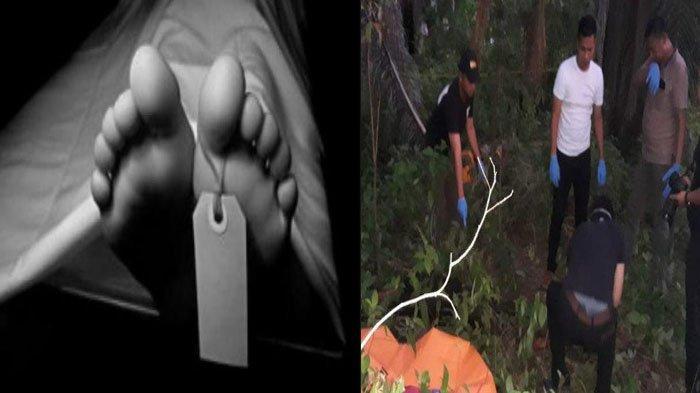 Misteri Mayat PNS Tergeletak di Kebun Sawit, Tangannya Terputus, Kondisi Koban Mengenaskan