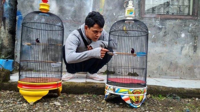 Kolibri Ninja, Burung Kicau Suara Merdu Yang Bisa Dipelihara di Rumah
