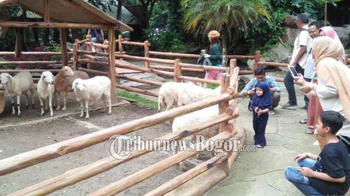 Pengunjung Taman Safari Indonesia, Cisarua, Bogor, Jumat (6/3/2020).