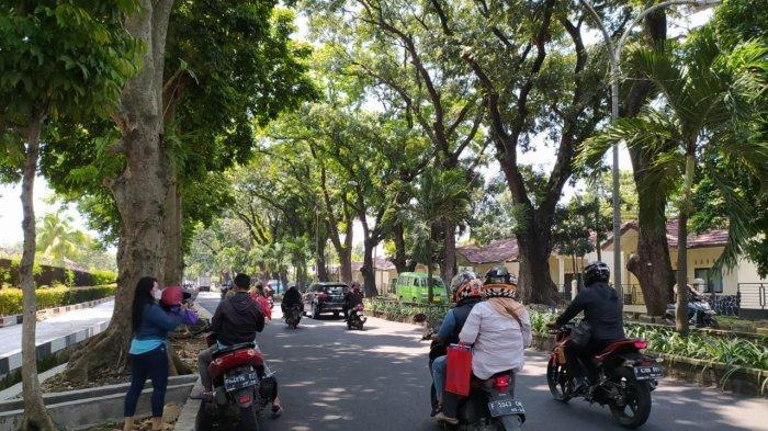 Titik Pohon Besar di Kota Bogor, Waspada Tumbang Saat Musim Hujan dan Angin Besar