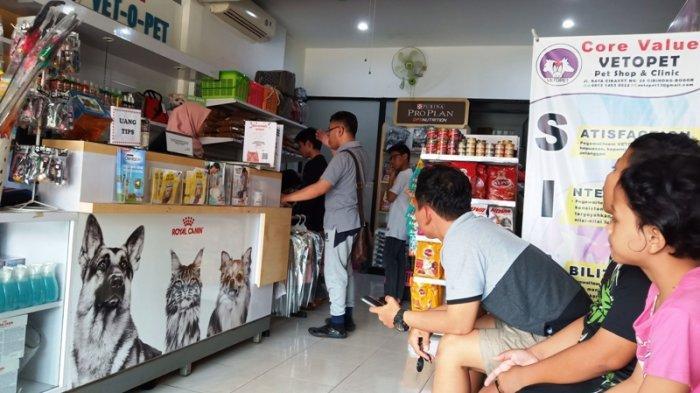 Musim Mudik, Pet Shop di Pabuaran Bogor Sudah Terima 70 Kucing Titipan