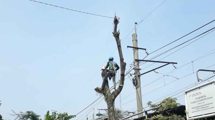 Cerita Rizal Ramli Setahun Ditugaskan Panjat Pohon, Khawatir Digigit Semut hingga Tersetrum