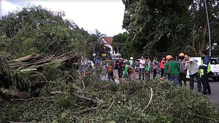 Pohon Beringin Berukuran Besar Tumbang di Jalan Ir H Djuanda, 2 Pengendara Motor Tertimpa