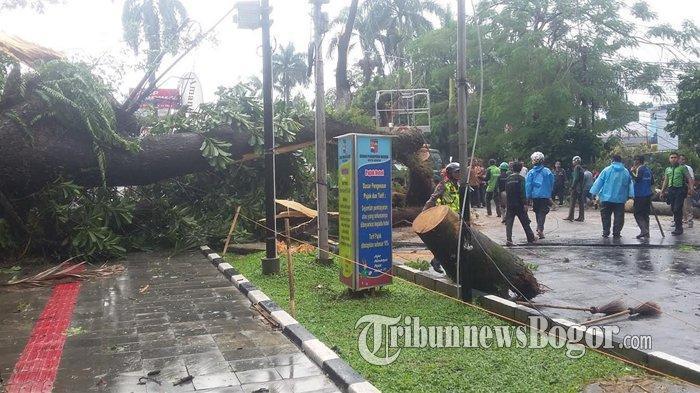 4 Pohon Tumbang Di Lokasi Berbeda Saat Hujan Angin Melanda Kota Bogor Sore Tadi