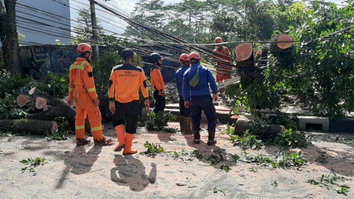 Pohon Besar di Depan LIPI Cibinong Tumbang Dihempas Angin Kencang, 2 Pengendara Motor Jadi Korban