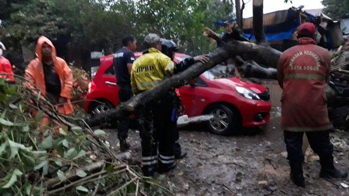 BREAKING NEWS - Pohon Tumbang di Paledang Bogor, Satu Mobil Ringsek