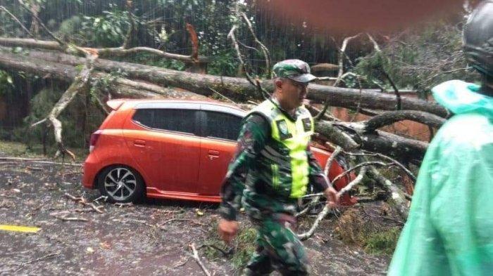 Diguyur Hujan Deras, Pohon Dijalur Puncak Tumbang Timpa Mobil Hingga Ringsek