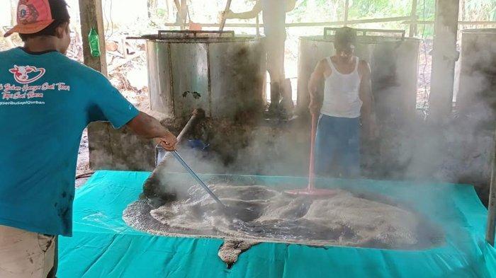 Omzet Rp 15 Juta per Hari, Begini Cara Pembuatan Cincau Hitam di Tenjolaya Bogor