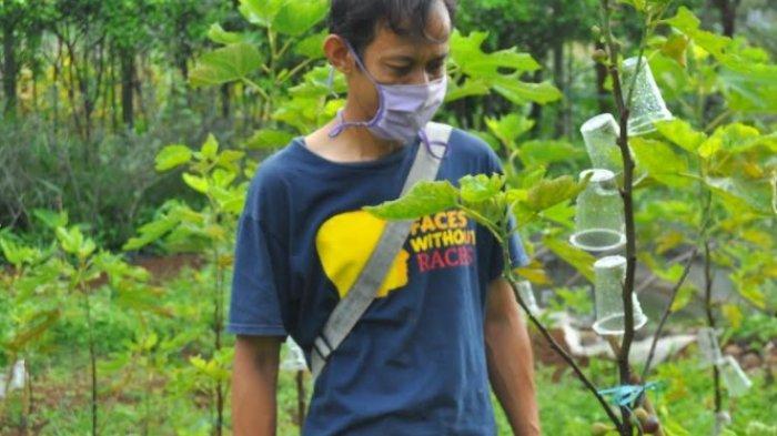 Founder Garden of Prospective Agriculture (GPA) Rana Wijaya ketika memperlihatkan buah tin hasil budidayanya