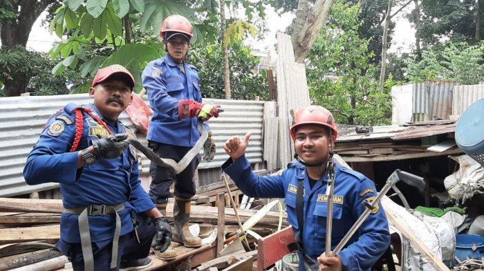 Selama Tiga Pekan, Damkar Kabupaten Bogor Tangkap 20 Ular Liar yang Masuk Permukiman Warga
