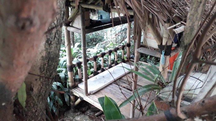 Rocky Gerung Sulap Kebun Singkong Sekitar Rumahnya di Bogor Jadi Hutan Lebat