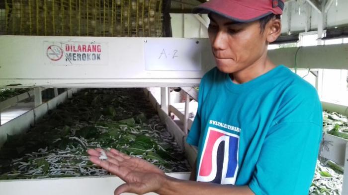 Ini Dia Tempat Wisata Edukasi di Bogor, Lihat Proses Pembuatan Kain Sutera Mulai dari Ulatnya