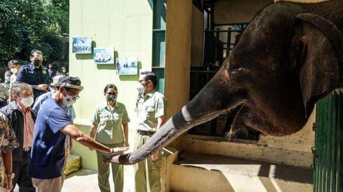 Sandiaga Uno Beri Nama Anak Gajah di Taman Safari Indonesia, Terinspirasi dari Pandemi