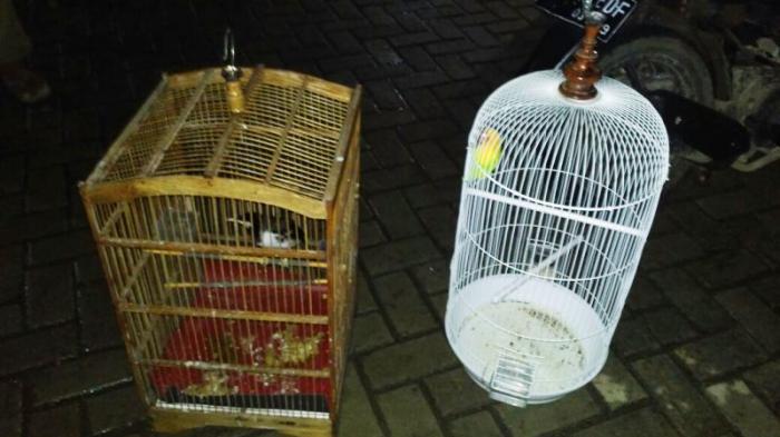 Dua Pemuda Ditangkap Warga Ketahuan Mencuri Burung, Lihat Apa Yang Digunakannya Dalam Beraksi