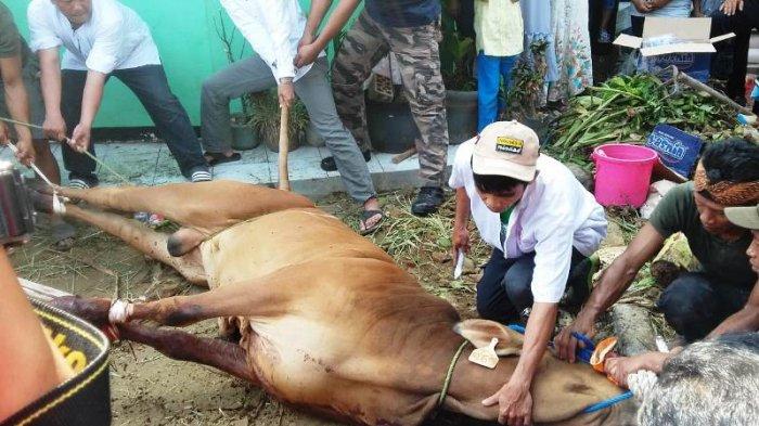 Ini Waktu yang Dibolehkan Menyembelih Hewan Kurban Menurut Pimpinan Ponpes Miftahul Falah Bogor