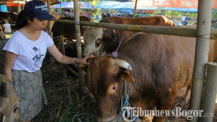 Menteri Pertanian: Harga Hewan Kurban Tahun Ini Naik Rp 500 Ribu Per Ekor