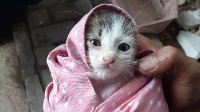 Kronologi Penyelamatan Anak Kucing yang Terjebak di Pipa Air, Damkar Bogor Sampai Turun Tangan