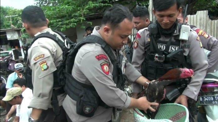 Praktik Judi Sabung Ayam Beromzet Jutaan Digerebek Polisi