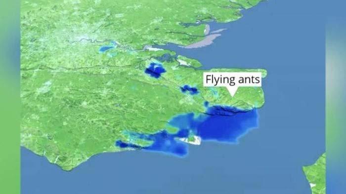 Ngeri ! Fenomena Aneh Kawanan Semut Terbang Tersebar di Hampir Seluruh Wilayah Inggris