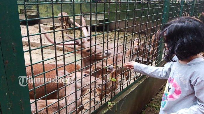 Deretan Kebun Binatang di Bogor, Rekomendasi Wisata Keluarga di Akhir Pekan