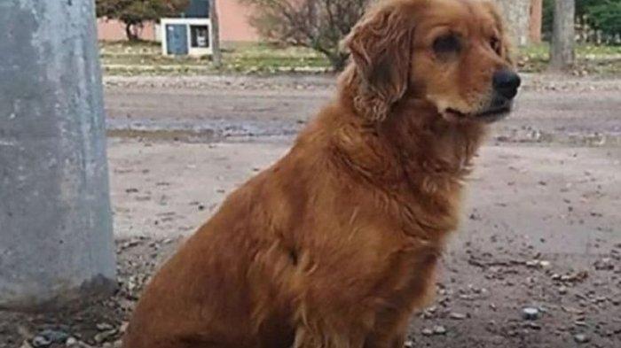 Majikannya Ditangkap, Anjing Ini Setia Tunggu Sampai 1 Tahun Di Depan Kantor Polisi