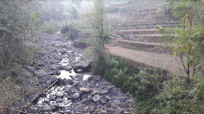 Kemarau Panjang di Sukamakmur Bogor, Kondisi Sungai Ciherang Surut Drastis