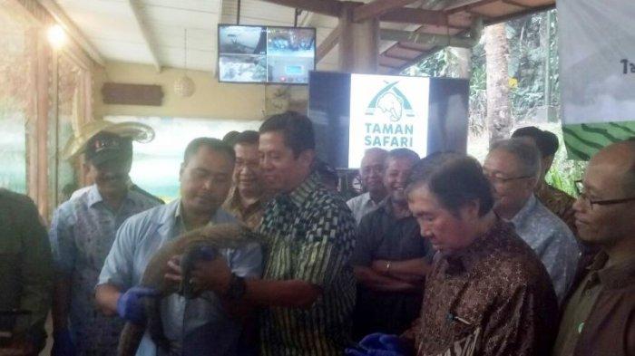 Taman Safari Indonesia Serahkan Sepasang Komodo ke TMII