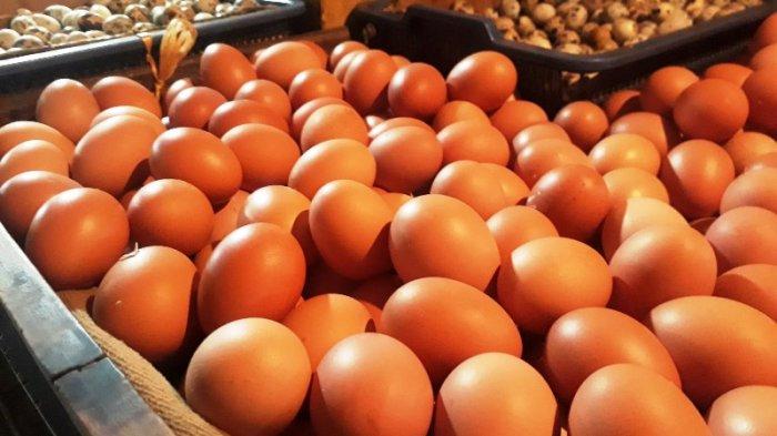 Sering Makan Telur?, Ini Manfaatnya Bagi Tubuh