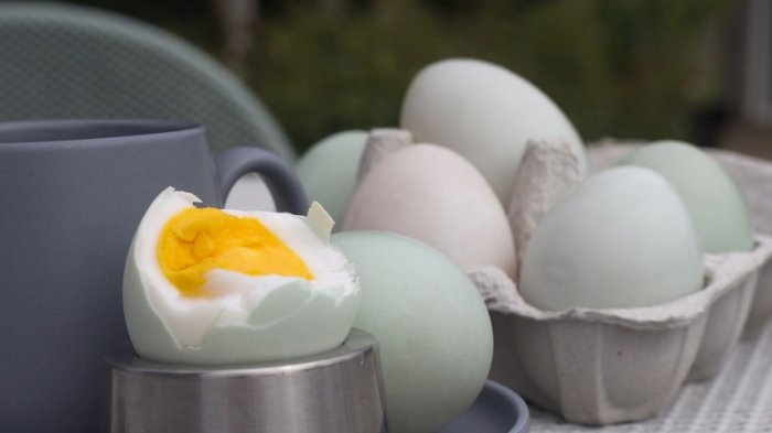 Begini Tips Masak Telur Rebus Beserta Cara Pilih Telur yang Baik
