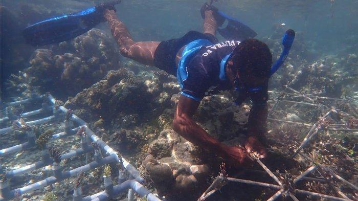PKSPL IPB University dan Kelompok Pengelola Ekosisten Pesisir Lakukan Transplantasi Terumbu karang