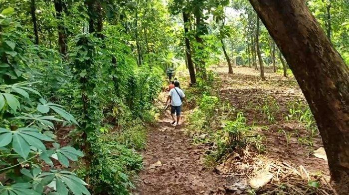 Hilang Misterius, Dua Bocah SD Sempat Terlihat di Tepi Hutan Jati