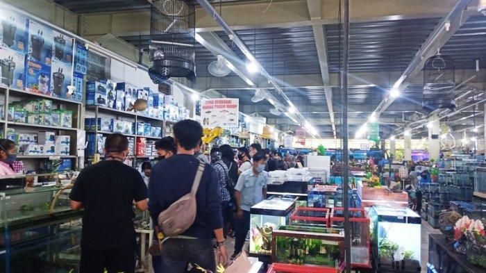 Trend Baru di Tengah Pandemi Covid-19, Toko Ikan Hias di Bogor Dipadati Pembeli