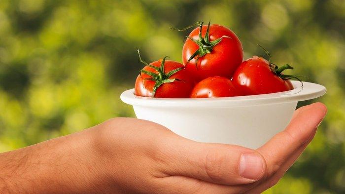 Trik Cara Merawat Tanaman Tomat Agar Subur dan Berbuah Lebat, Ikuti 9 Tips Ampuh Ini