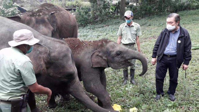 TSI Pamer Koleksi Gajah yang Lahir Saat Pendemi, Salah Satunya Diberi Nama Pulih Indonesia