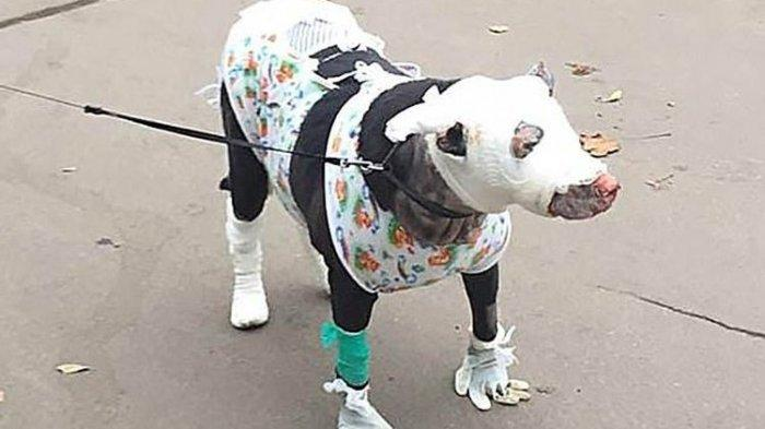 Selamatkan Pasien Rumah Sakit yang Terjebak Kebakaran, Anjing Ini Alami Luka Bakar