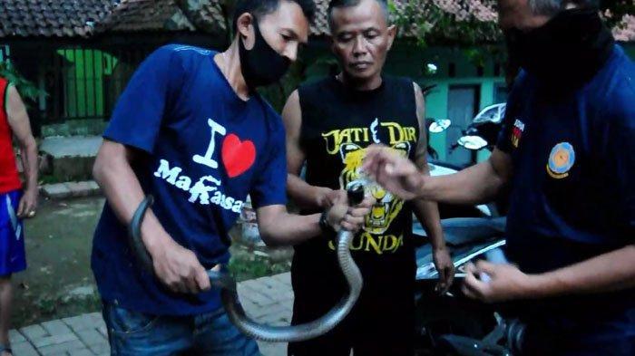 Sedang Asik Ngobrol, Pegawai Kelurahan Bogor Kaget Ada yang Mendesis di Bawah Kursi