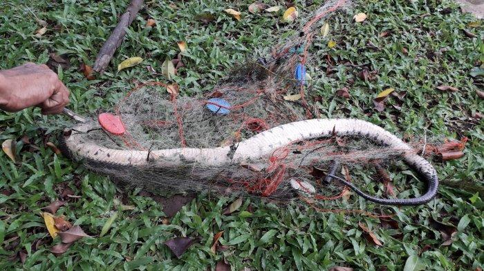 Arti Mimpi Membunuh Ular Menurut Primbon Jawa