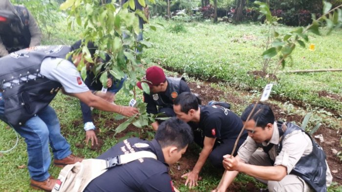 Prihatin Lihat Kondisi Puncak, Komunitas Vespa Ambil Cangkul Hingga Tanam Pohon di Kawasan Puncak