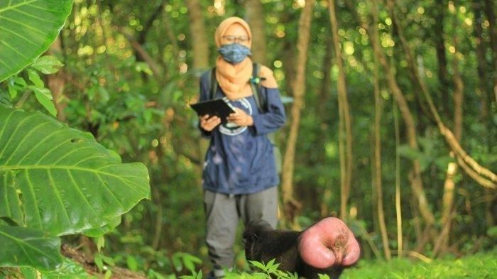 Viral Demi Meneliti Perilaku Tidur Monyet Jambul Hitam, Mahasiswi IPB Rela 10 Bulan Hidup di Hutan