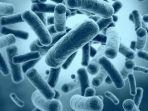 bakteri-baik_20171010_093824.jpg