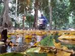 bogor-hujan-2_20151014_170736.jpg