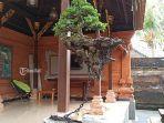 bonsai-avatar.jpg