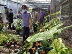 dinas-tanaman-pangan-dan-hortikultura.jpg